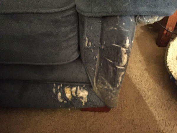 Repairing Cat Scratched Couch Thriftyfun