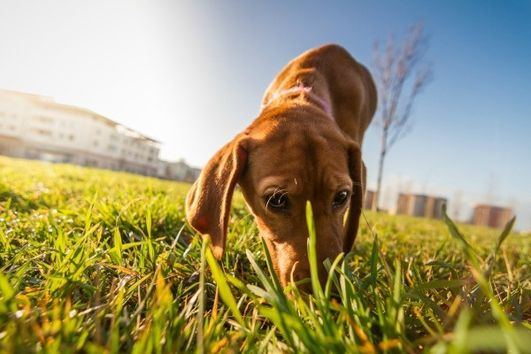 How To Get Rid Of Dog Urine On Grass