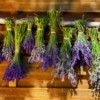 Bundles of lavender hanging upside down to dry against a wooden background
