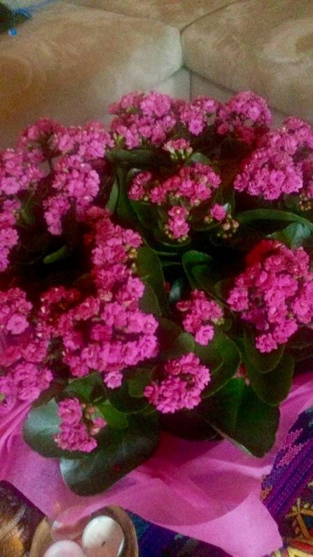 deep pink multi petaled flower