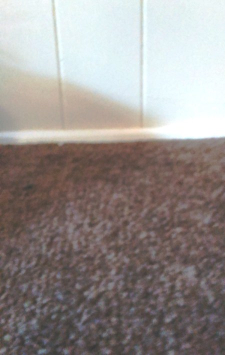 carpet closeup