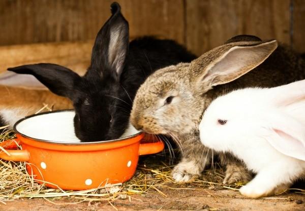 Raising Pet Rabbits Thriftyfun