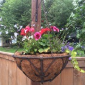 Planting a Hanging Flower Basket