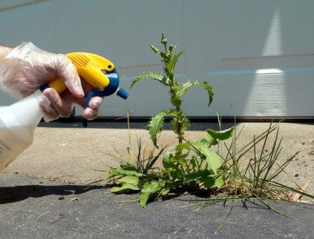 Gloved hand using a spray bottle to spray a week growing in a driveway crack