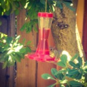 Squirrel on hummingbird feeder