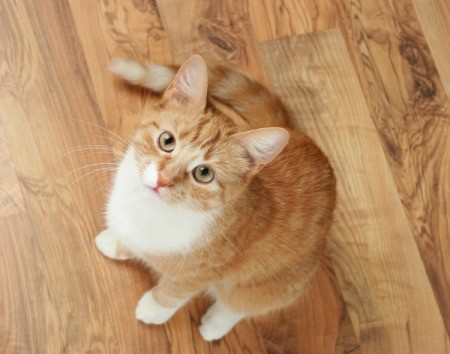dog breeds for cat lovers