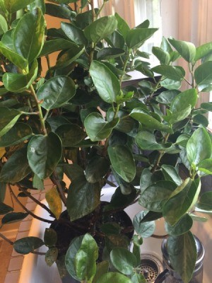 medium green foliage plant with upright stems