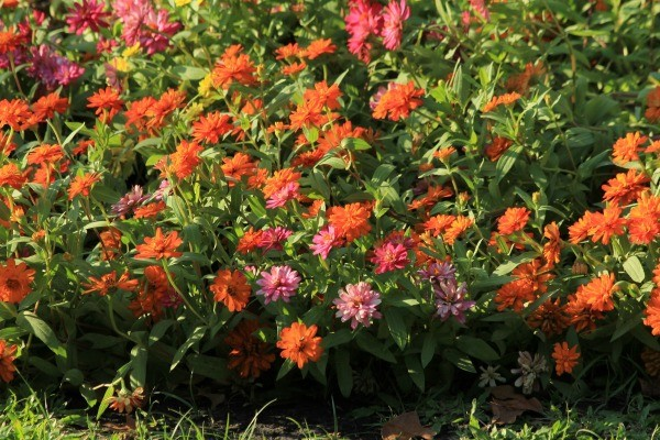 Preventing weeds in flower beds thriftyfun for Grasses for flower beds