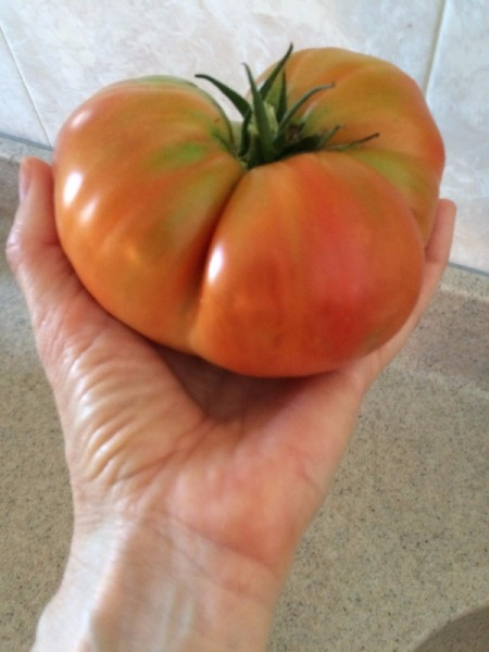 hand holding a beefsteak tomato