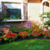 red impatiens in front of house