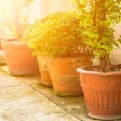 Potted plants in bright sunlight