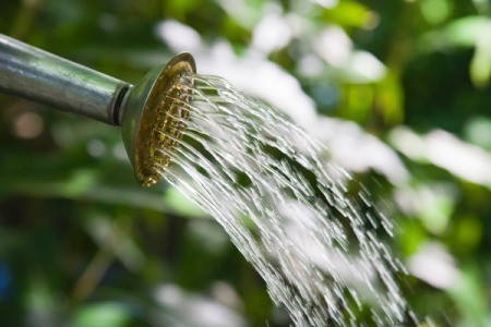 Watering With Ammonia