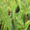 Renting Boston Ferns