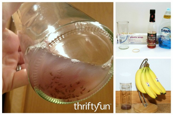 making a fruit fly trap thriftyfun. Black Bedroom Furniture Sets. Home Design Ideas