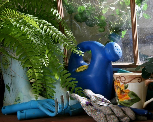 Potted fern in greenhouse next to watering can, goulashes, spade, and gardening gloves