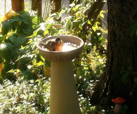 Homemade Birdbath Ideas Thriftyfun