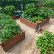 Several raised garden beds full of lush plants