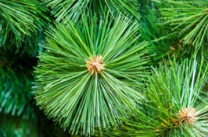 Uses for Artificial Christmas Trees
