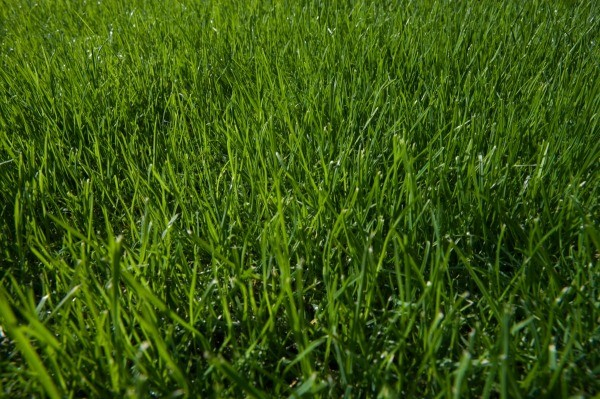 Growing Green and Healthy Grass