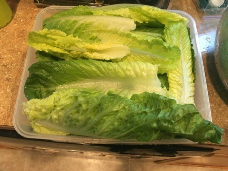 Cleaning and Storing Romaine Hearts