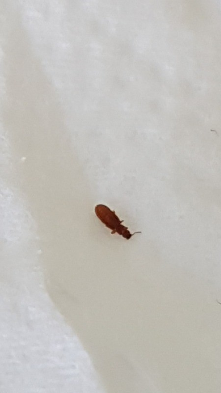 Brown bugs in bathroom