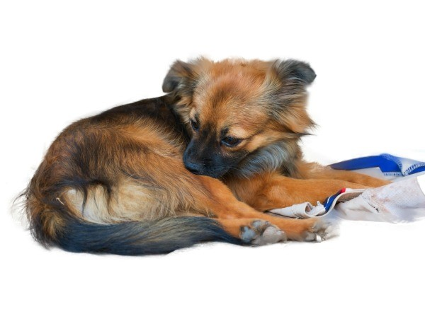 how to fix dry skin on dogs
