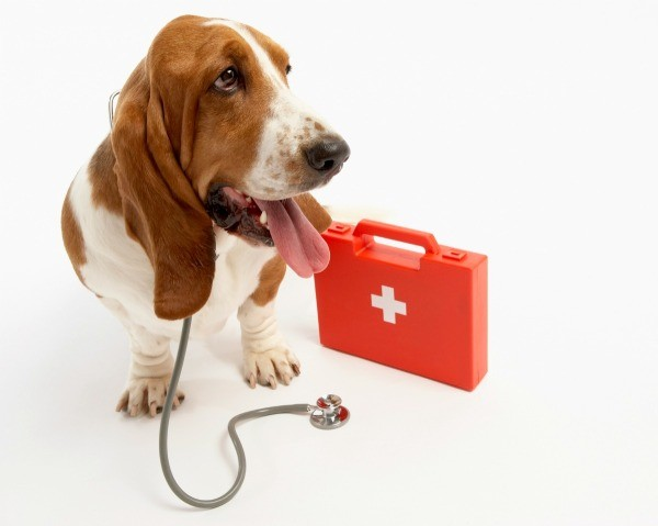 Basset Hound with first aid kit and stethoscope