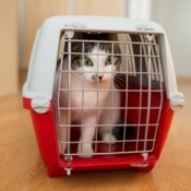 Cat inside a cat carrier on a wooden floor inside a home
