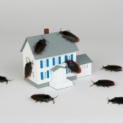 Miniature of a house, which is being covered and surrounded by cockroaches