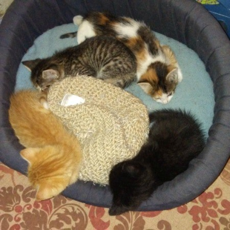 Teaching Kittens to Sleep in Their Own Bed