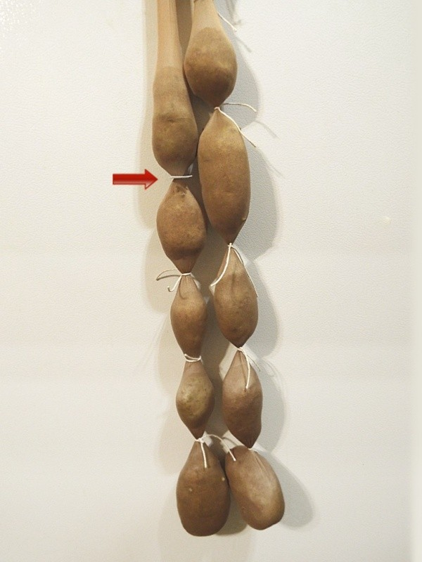 Hanging potatoes in pantyhose.