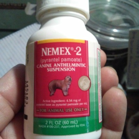 Product Review: Nemex 2 for Worming Cats and Kittens