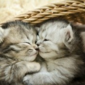 Kittens sleeping in a basket.