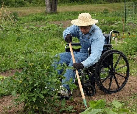 A person in a wheelchair gardening.