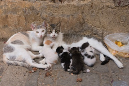 A family of cats on the street.