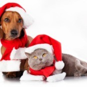 A cat and a dog with Santa hats.