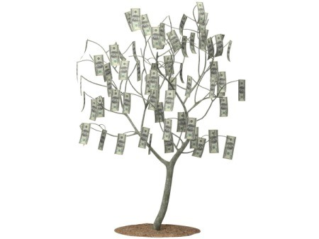 Photo of a money tree.