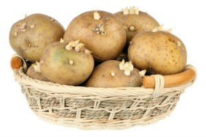 Sprouting potatoes in a bowl.