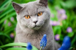 A gray cat among flowers.