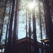 The sun glimmering through tall trees.