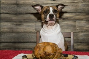 Dog sitting at a table with a roasted poultry on plate.