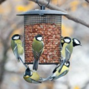 A bunch of birds at an garden birdfeeder.
