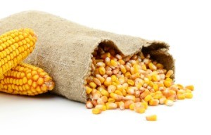 A bag of corn kernels.