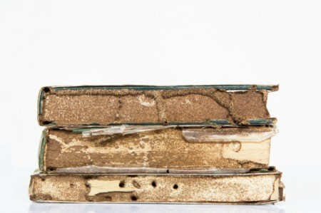 Three old books that have been damaged by termites.
