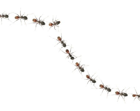 A line of ants on a white background.