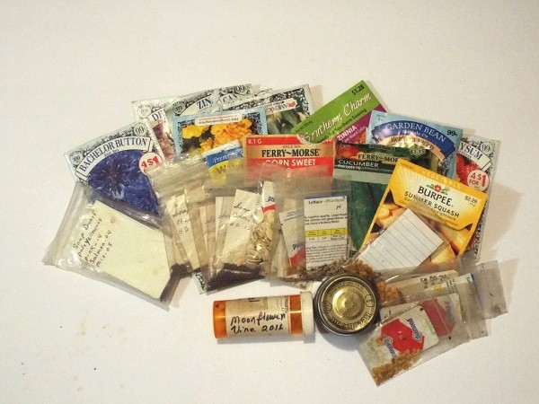 Organizing Seeds - lots of seed packets