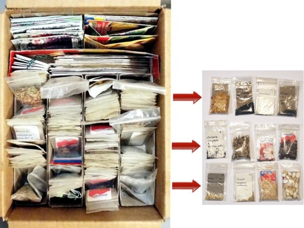 Organizing Seeds - ordered bags of seeds
