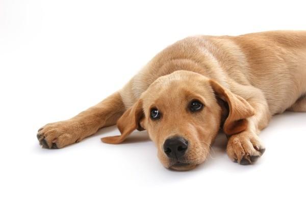 Can I Give My Dog Garlic Pills