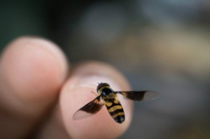 A bee flying in front of a finger.