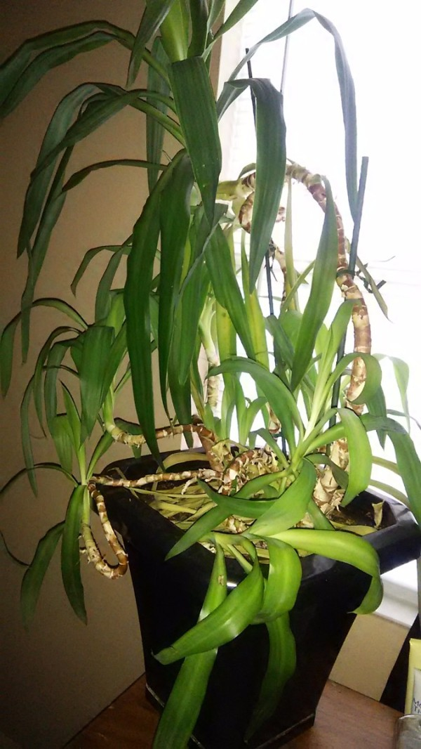what_is_this_houseplant_l3 House Identify Plant By Leaf on house plant with heart shaped leaves, ash trees identification by leaf, vine identification by leaf, identify a plant leaf, house plant identification, vegetable identification by leaf,